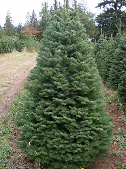 Sturmu0027s. Christmas Trees